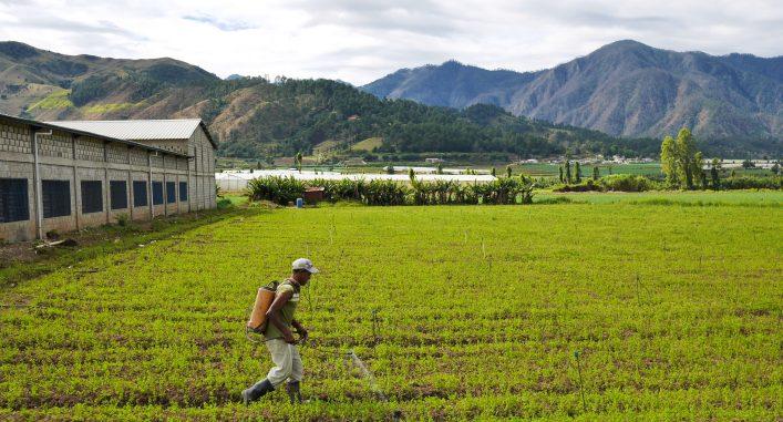 Lantarbetare besprutar jordbruksgift utan skyddsutrutsning på Dominikanska Republiken. Foto: Lari Honkanen
