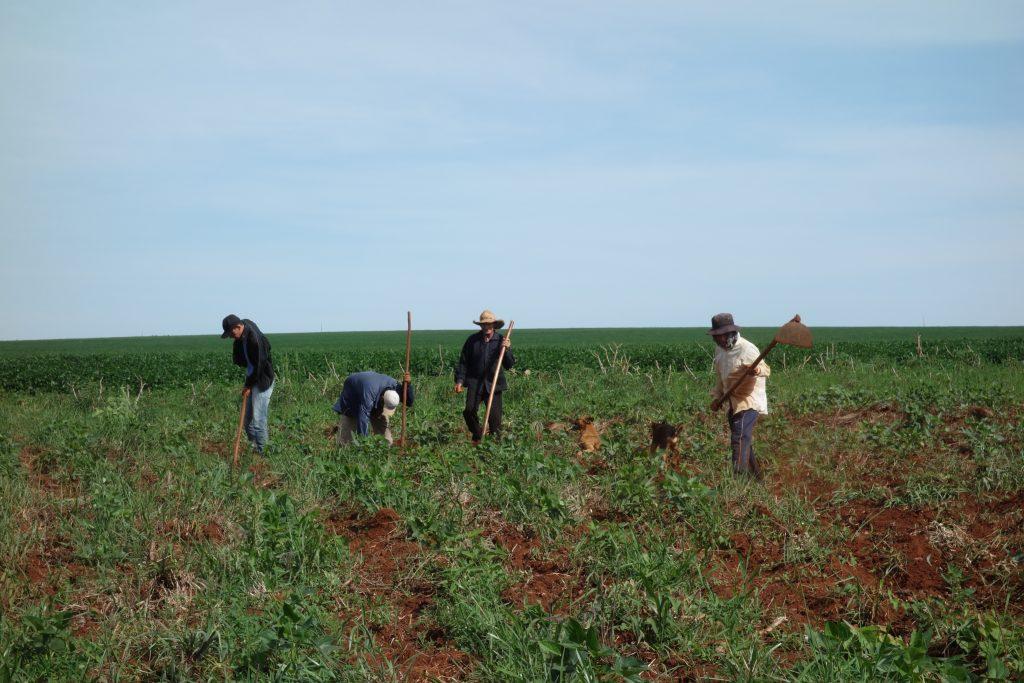 Varje dag jobbar Lorenzo på sin chacra, sitt fält. Det gränsar till GMO-sojafält på två olika håll, en situation som många småbrukare i Paraguay tvingas leva med idag. Foto: Julian Dannefjord